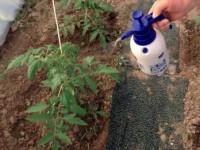 Чем подкормить помидоры — подробное описание как подкармливать разные сорта томатов (115 фото)