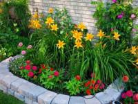 Как красиво оформить клумбу — идеи, схемы и варианты организации клумбы на участке ив саду (125 фото)