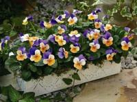 Лучшие цветы для дачи: красивые многолетние цветы и особенности их выращивания (105 фото)