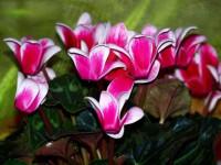 Лучшие цветы для клумбы — неприхотливые, красивые и цветущие все лето цветы для дачи и сада (115 фото)