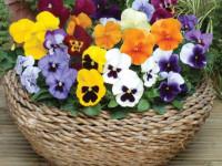 Многолетние цветы для дачи — идеи ландшафтных дизайнеров по выбору и применению многолетников (135 фото)