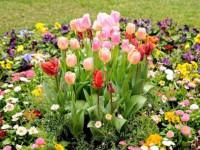 Низкорослые цветы для клумбы — самые красивые низкорослые цветы и советы как садить низкорослые цветы правильно (110 фото + видео)