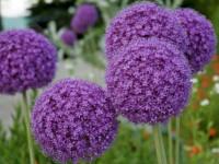 Самые неприхотливые цветы для сада — обзор самых простых для выращивания цветов и растений (105 фото)