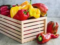Болгарский перец польза и вред — советы как выбрать перец правильно и какими свойствами он обладает (115 фото)
