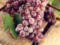Чем полезен виноград — описание влияния на организм взрослого и ребенка. 130 фото и видео полезных свойств винограда
