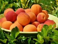 Чем полезны абрикосы — 115 фото лучших сортов и видео описание их выращивания
