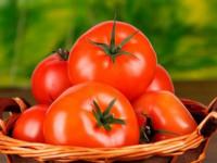 Сорта помидоров для открытого грунта — лучшие сорта и обзор методов выращивания томатов (140 фото)