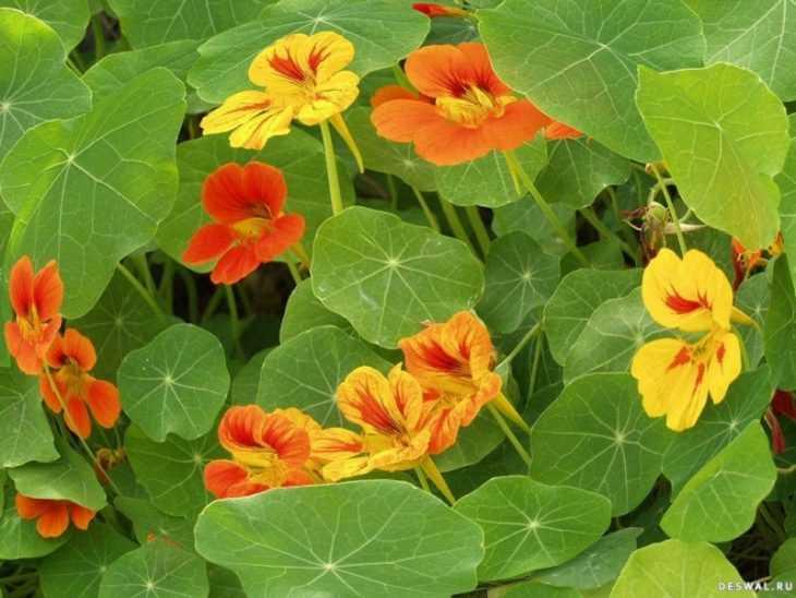 Быстрорастущие вьющиеся растения - обзор лучших вариантов для забора, правила их посадки и ухода за ними (105 фото)