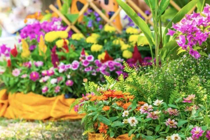 Цветники на даче - особенности и нюансы оформления цветника для начинающих (120 фото и видео)