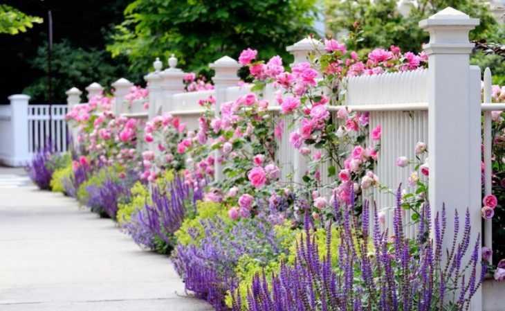 Цветочные клумбы - принцип выбора цветов и правила разбивки красивых клумб своими руками (130 фото)