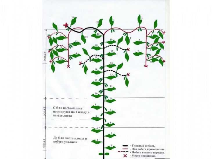 Как формировать огурцы - как правильно в открытом грунте вырастить огурцы (125 фото и видео)