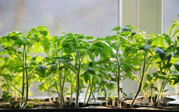 Как сажать помидоры: лучшие способы посадки и правила выращивания в теплице и в открытом грунте (115 фото)