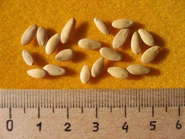 Как замочить семена огурцов перед посадкой - пошаговая инструкция как правильно замочить семена (105 фото + видео)