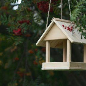 Кормушка для птиц — отличные идеи простых и красивых кормушек для детей и взрослых (125 фото)