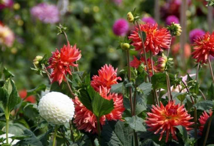 Лучшие цветы для клумбы - неприхотливые, красивые и цветущие все лето цветы для дачи и сада (115 фото)