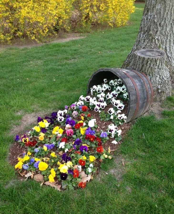 Низкорослые цветы для клумбы - самые красивые низкорослые цветы и советы как садить низкорослые цветы правильно (110 фото + видео)