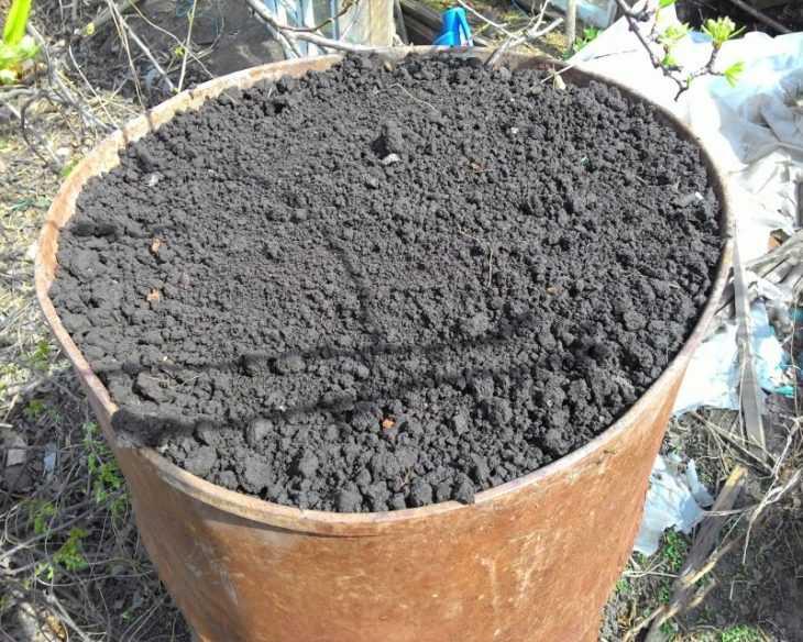 Огурцы в бочке - простая инструкция как посадить и советы как вырастить огурцы (115 фото и видео)