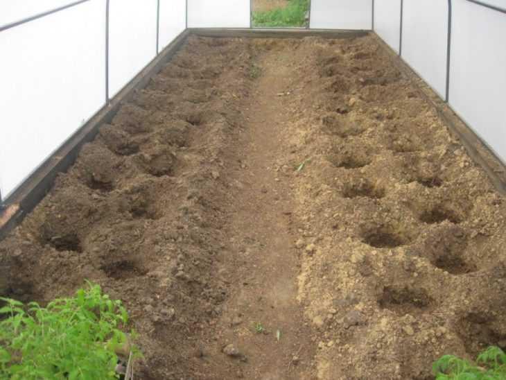 Огурцы в парнике: подробная инструкция выращивания парниковых огурцов своими руками (105 фото + видео)