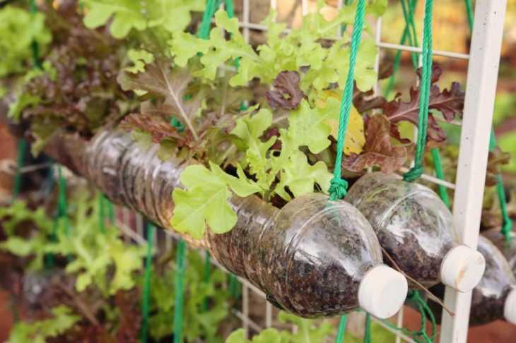 Поделки из пластиковых бутылок - пошаговое руководство как изготовить классные поделки для сада (видео + 145 фото)