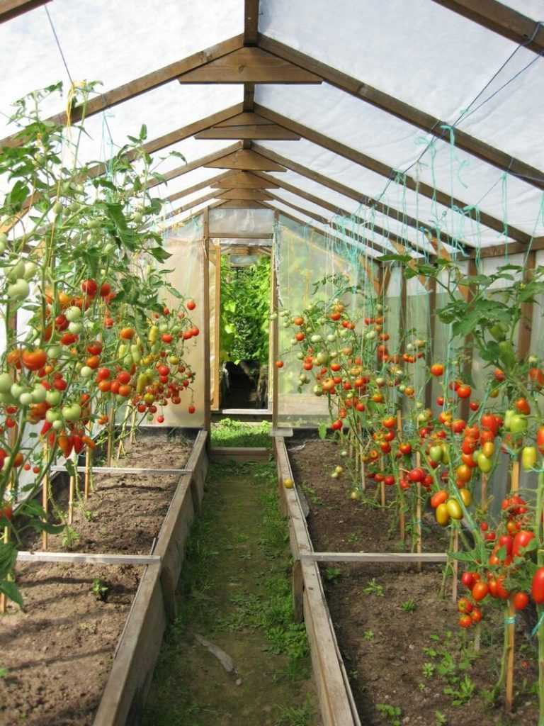 было как правильно разместить помидоры в теплице фото также можно воспользоваться