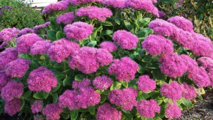 Самые неприхотливые цветы для сада - обзор самых простых для выращивания цветов и растений (105 фото)