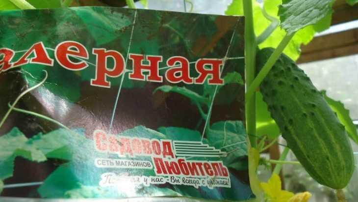 Сетка для огурцов - советы по выбору, особенности и варианты натяжения сетки для выращивания огурцов (100 фото)