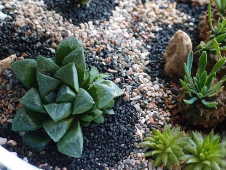 Суккуленты: обзор и описание выращивания своими руками. Простые и красивые идеи посадки суккулентов (120 фото)