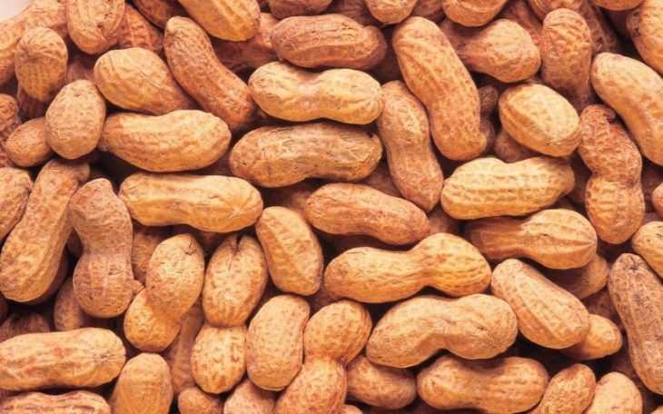 Земляной орех - как вырастить арахис своими руками? Польза, вред и особенности выращивания (105 фото)