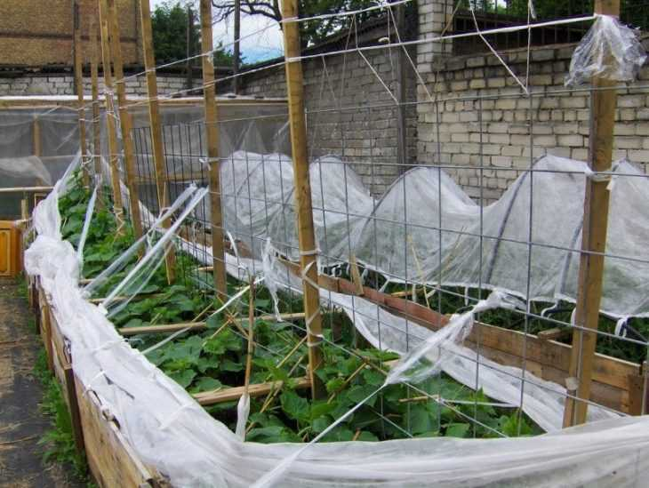 Чем обработать огурцы чтобы не желтели листья: советы по обработке и правила подкормки огурцов (115 фото)