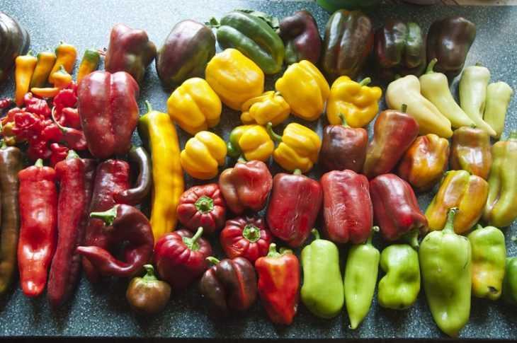 Формирование перца: 110 фото основных правил и особенности формирования сладкого перца