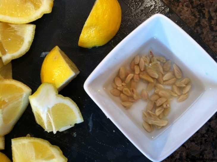 Как пересадить лимон - 115 фото и видео пересадки лимона в теплицах и в открытом грунте