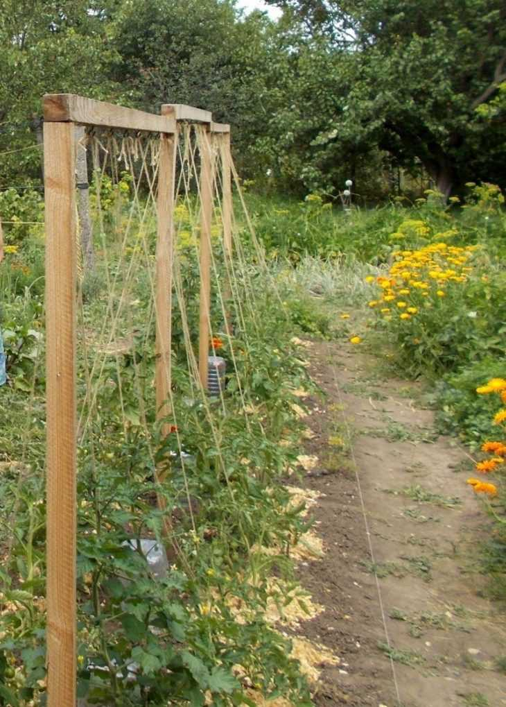 Как поливать помидоры: подробная инструкция и советы начинающим как правильно поливать томаты (100 фото)