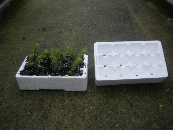 Как посадить ель: советы как правильно выбрать ель, особенности и нюансы посадки (видео + 110 фото)