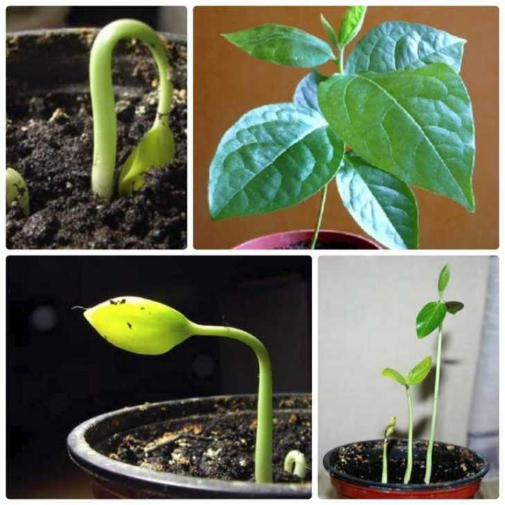 Как растет хурма - 100 фото выращивания, уход и способы размножения хурмы своими руками