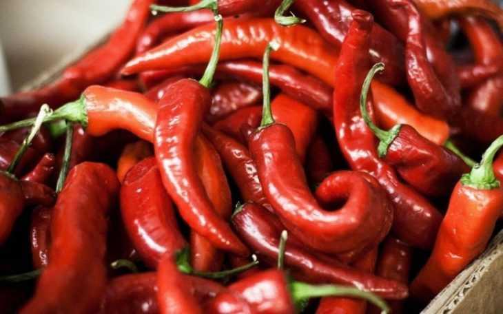 Красный перец польза и вред - обзор основных и необычных качеств и свойств перца (105 фото)