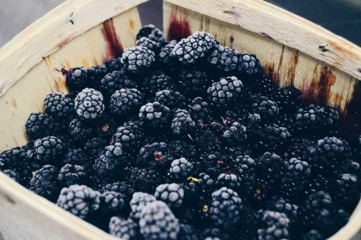 Малина кумберленд - советы по выбору и выращиванию. Обзор достоинств и недостатков сорта (110 фото)