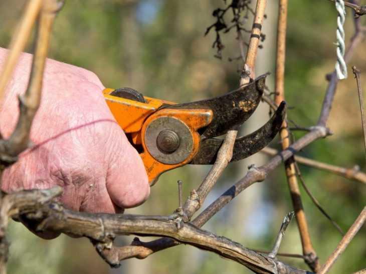 Обрезка крыжовника: советы как правильно и эффективно обрезать крыжовник (105 фото и видео)