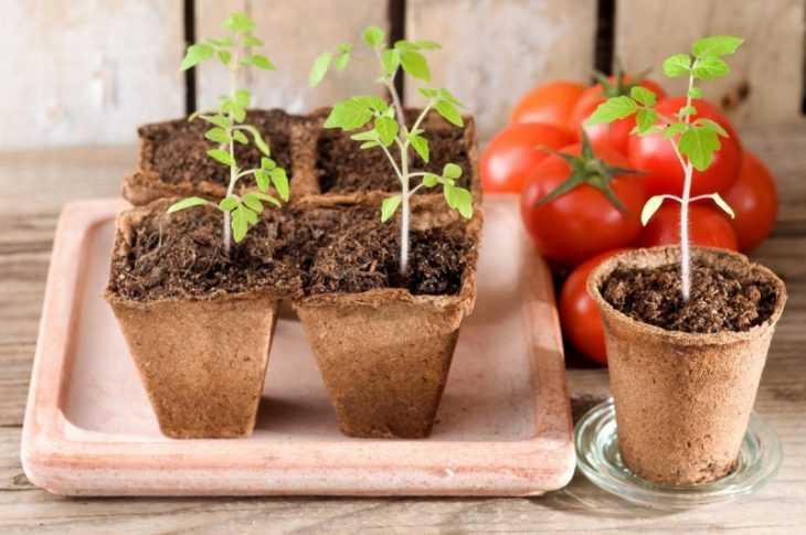 Ранние сорта помидор - самые популярные сорта с описанием характеристик и секретов выращивания (100 фото)