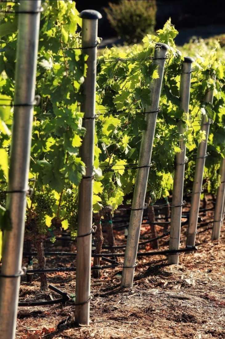 Шпалера для винограда своими руками: чертежи шпалер для успешного выращивания и увеличения урожайности (125 фото)