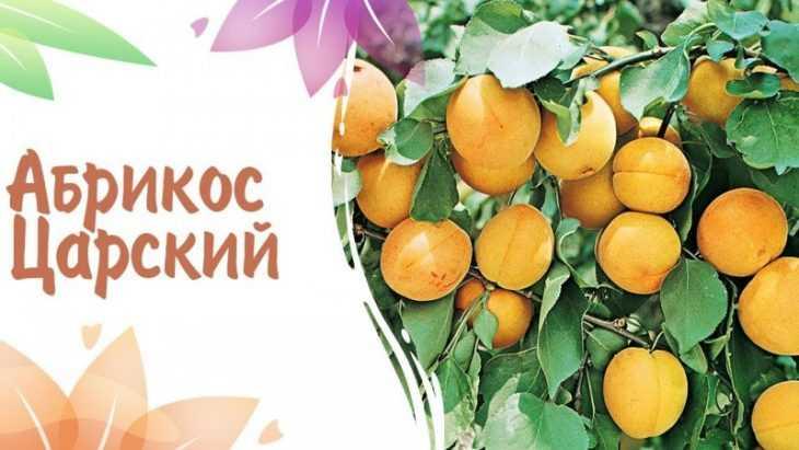 Сорта абрикосов: название и подробное описание лучших и обзор самых популярных сортов (110 фото + видео)