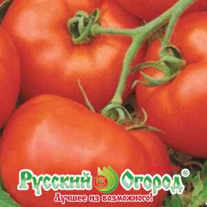 семена томатов ранний грунтовой