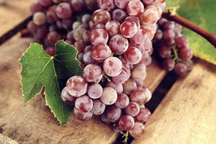 Виноград вика