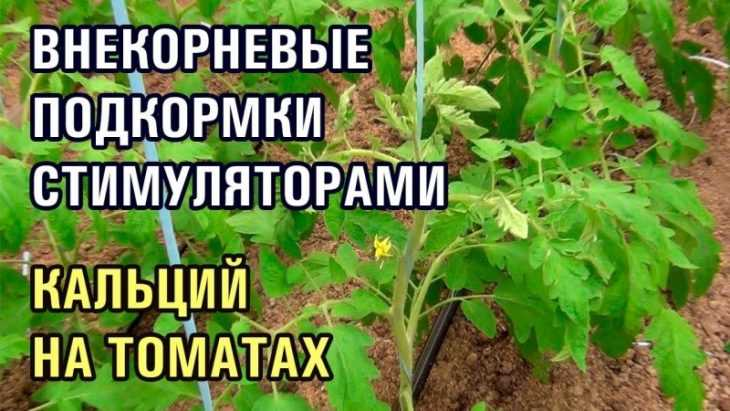 Внекорневая подкормка томатов: 115 фото и видео подкормки, этапы проведения и особенности применения томатов