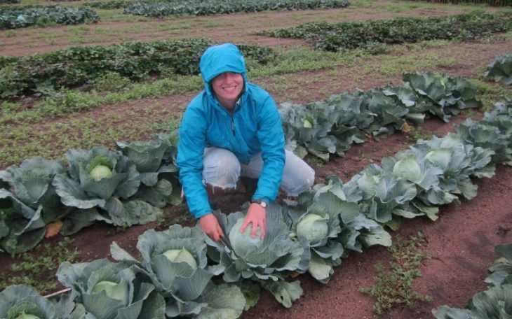 Выращивание капусты в открытом грунте - подробное описание по уходу и посадке кочанов капусты (видео + 105 фото)