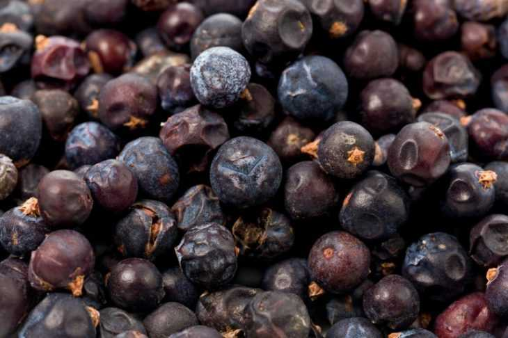 Ягоды можжевельника - способы использования, описание и применение в лекарственных целях
