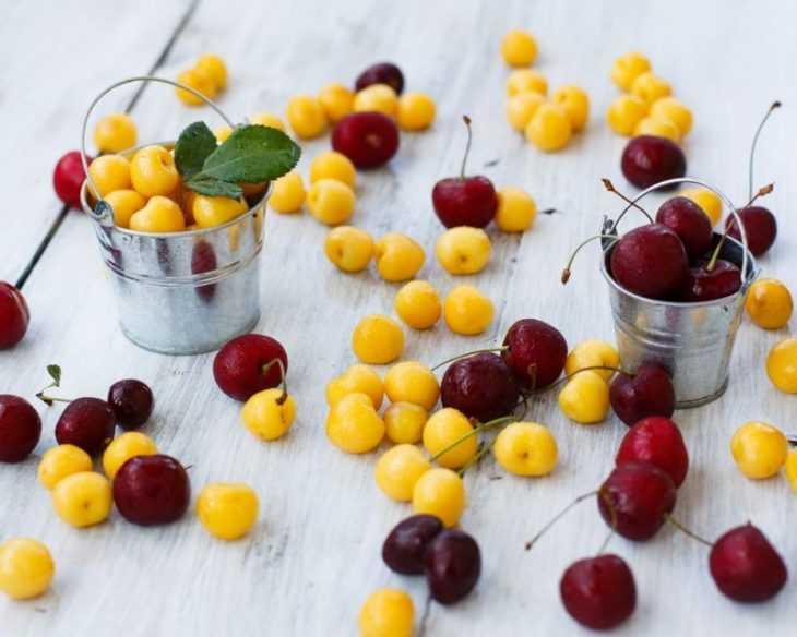 Желтая черешня - выбор сорта, особенности ухода и самые распространенные варианты приготовления (105 фото)